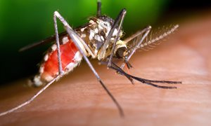 Mosquito-killing drug shows effect for a month - Possible